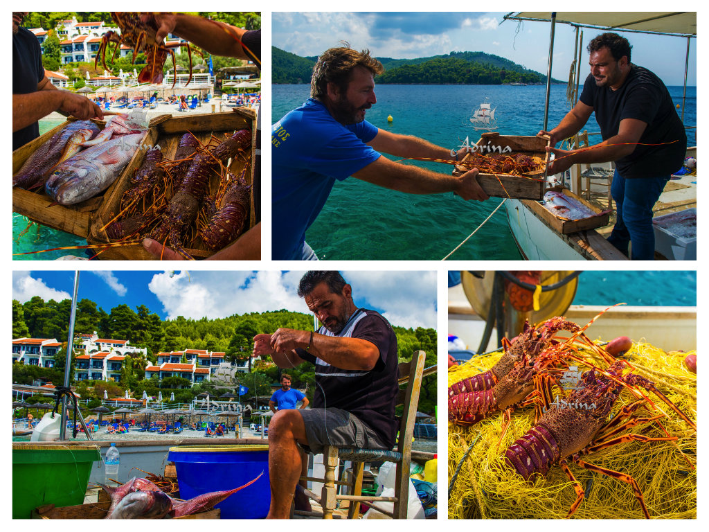 skopelos-restaurants-fresh-fish-15